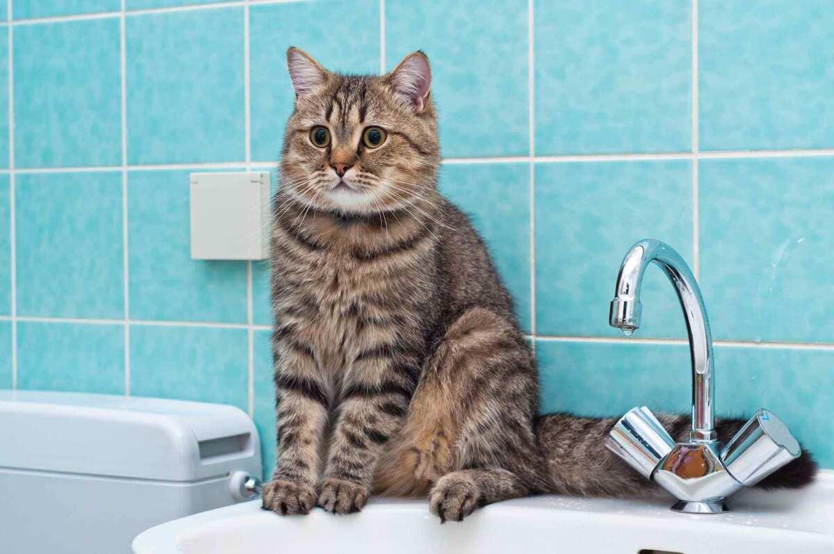 22 и 23 февраля в части Одессы и пригороде отключат воду: список адресов