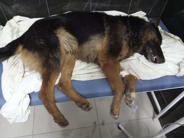 В Запорожье неизвестные рассыпают на улицах яд для бездомных животных (ФОТО)