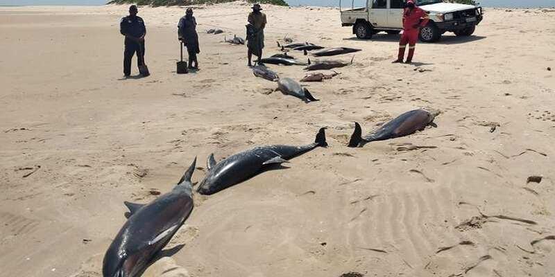У берегов Африки загадочно погибают дельфины: найдено уже более 100 тел (фото)