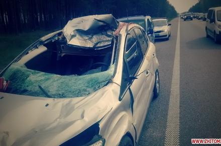 Суд оштрафував водія, який на трасі Київ – Чоп у Житомирській області збив лося, що раптово вибіг з лісу