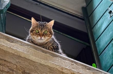 У Житомирі поліція розбирається із загибеллю кішки: мешканці будинку на Грушевського кажуть – сусідка викинула тварину з вікна