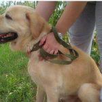 Его прятали 6 лет: в Киеве хозяин нашел похищенного пса (трогательное видео)