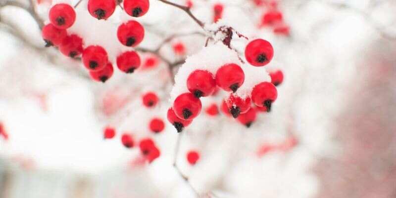 Морозы возвращаются: синоптики озвучили прогноз погоды на 12 февраля в Украине