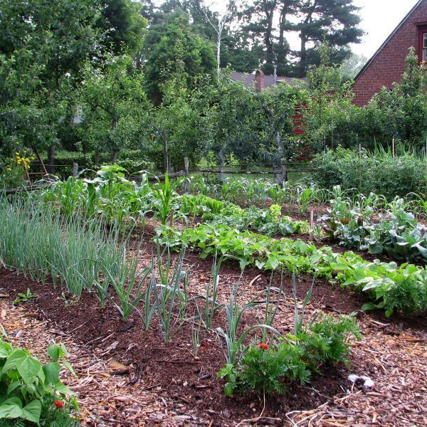 Земледелие, садоводство, огородничество и цветоводство.