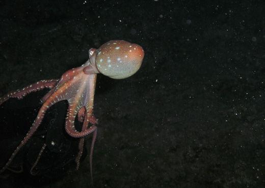 night diver 1