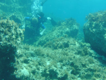 Amphitheatre under-water diver