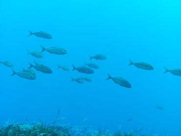 Latchi beach undersea life