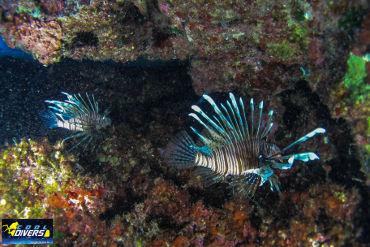 Aphrodite Rock undersea life