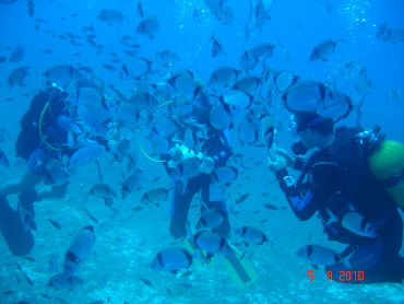 divers in deep water with undersea life