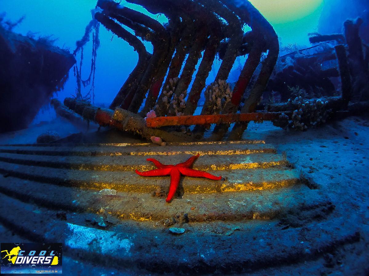 Cool Divers Latchi - wreck