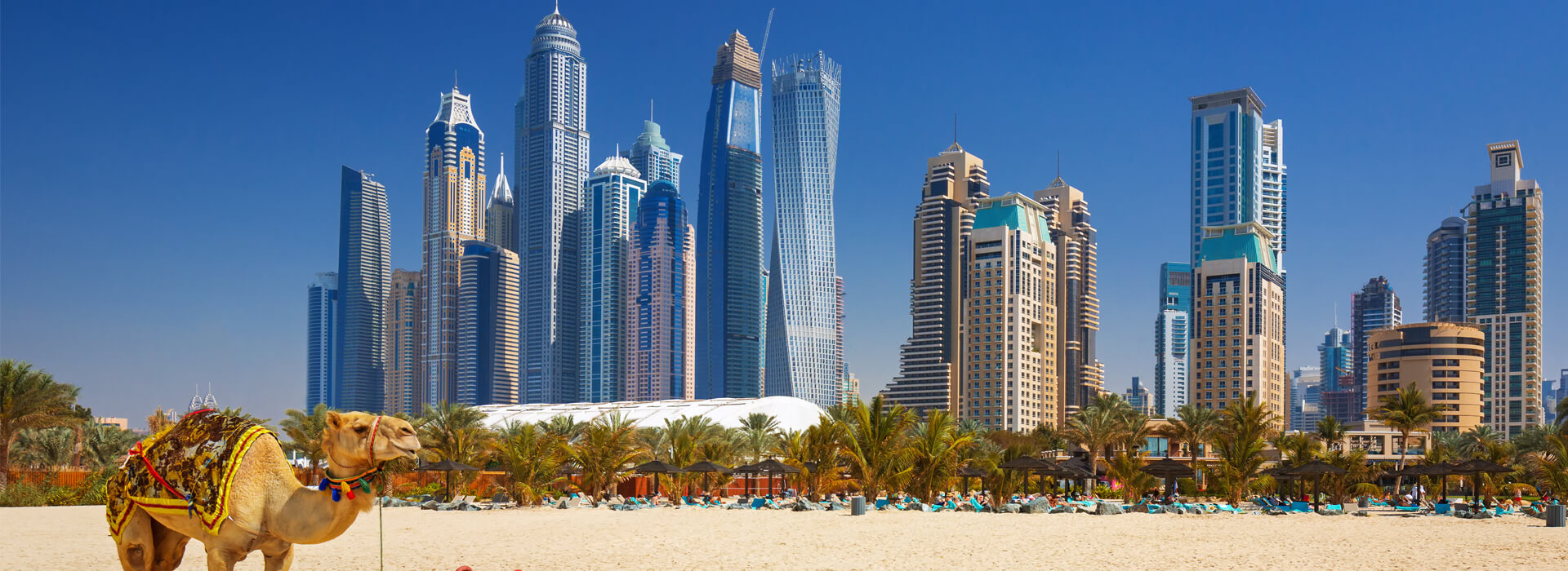 Dromedarus op het strand van Dubai