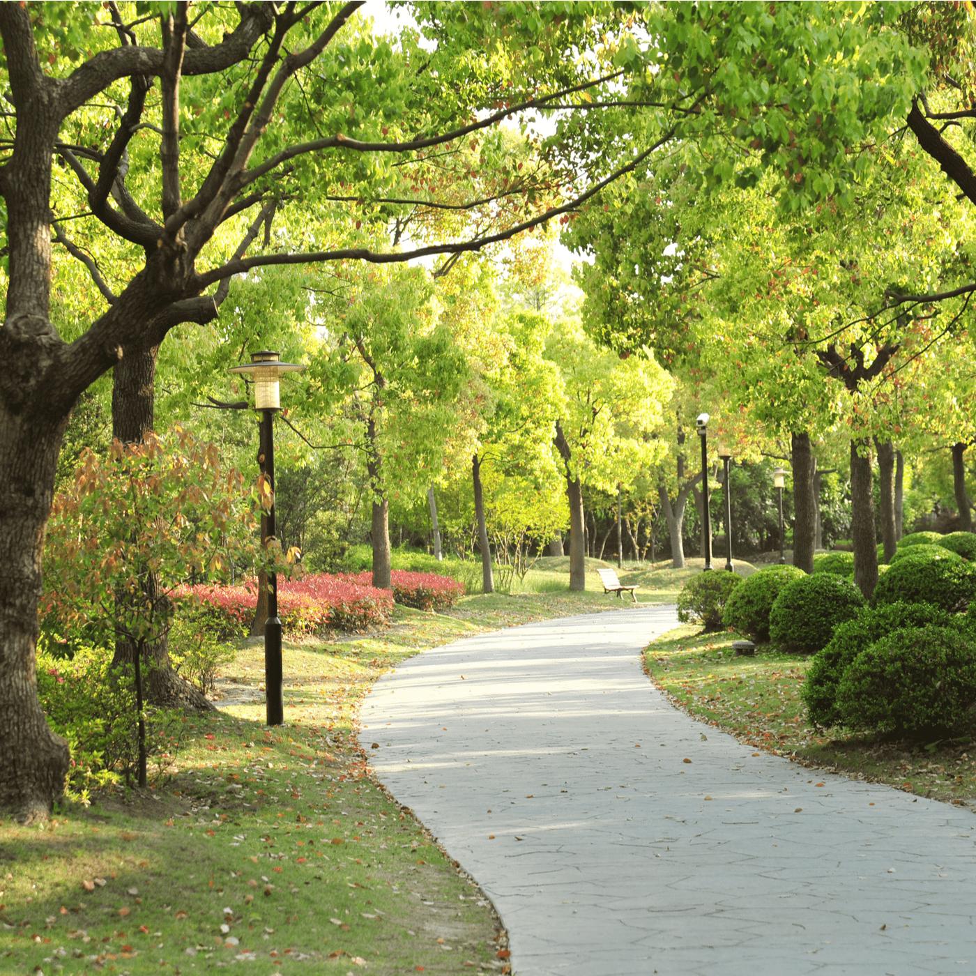 Bomen in een park