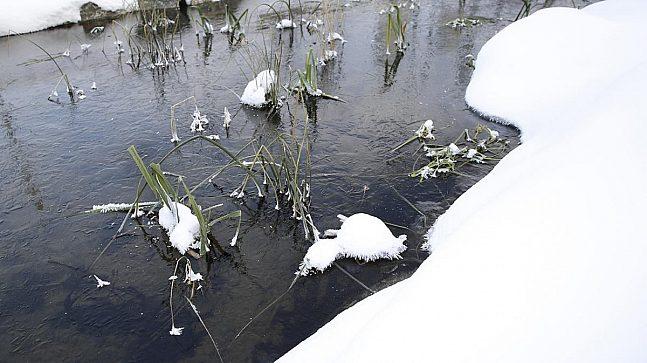 KORTREIST: Planter som er brukt i gjenåpningen av Hovinbekken er hentet fra andre vassdrag i Oslo. Noen av dem binder for eksempel fosfor og bidrar til renere vann.