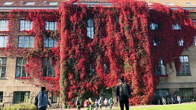 HØSTFARGER: Villvinen som klatrer over hele veggen på Lids hus (tidligere Botanisk museum) er som vakrest om høsten (Foto: Ellen Stokland).