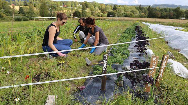 Ba Nyo, Hannah Cooper og Serina Beate Engebretsen har siden mai i år vært medlemmer i andelslandbruket på gården Øvre Kirkeby i Maridalen.