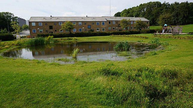 Liten dam i friareal som mottar overvann fra regnbed og grønne bekker er blant tiltakene som er gjort for bedre håndtering av overvann utenfor København.