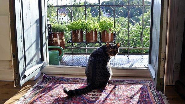 Også en katt har flyttet inn med familien Danielsen-Ofstad i femte etasje i en 1900-tallsbygård på Grünerløkka.