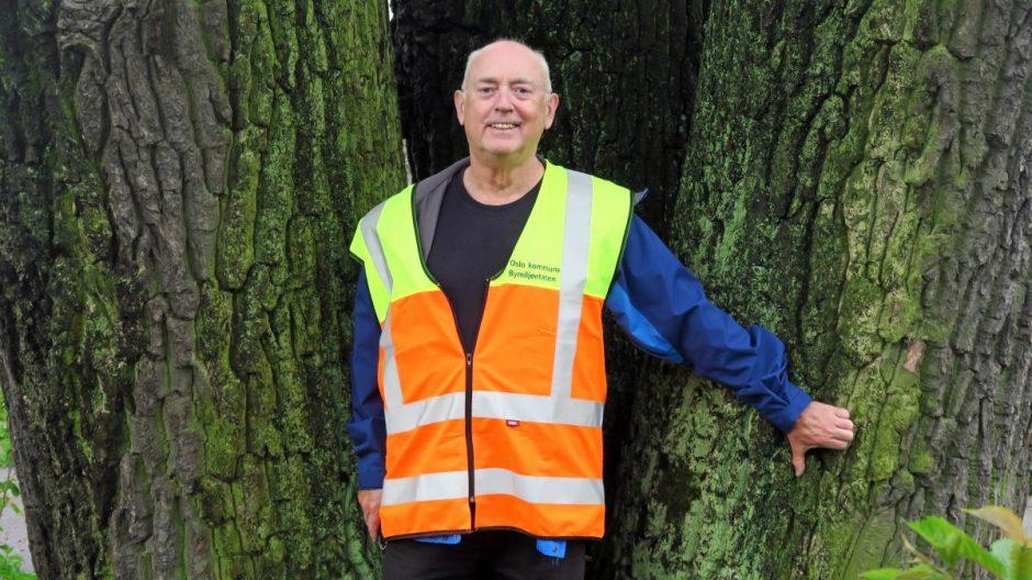 – Trær skaper verdier som legger kroner til kommunebudsjettet. Vi må beregne hvor mye denne hule eika og andre trær bidrar med, mener Tore Næss, faglig leder for bytrær i Bymiljøetaten.