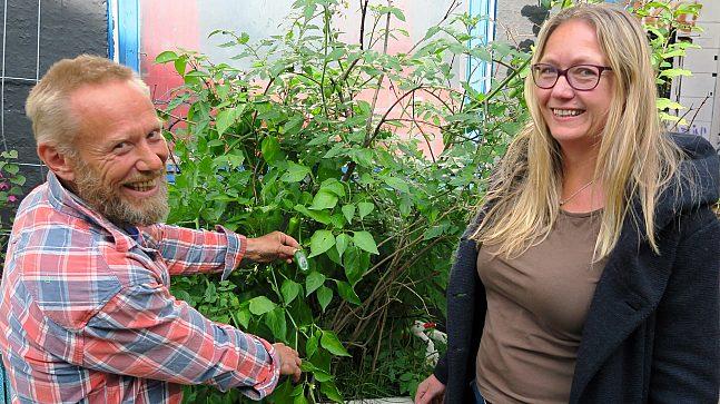 Gunnar Franck (t.v.) og Anne Thomassen ved Hausmania dyrker grønnsaker og fremmer byøkologi i kulturhusets bakgård.