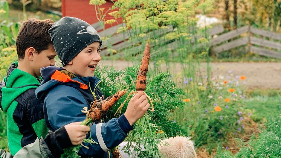 BESØK PÅ SØRLI GÅRD: Her en elev fra klasse 4a ved Nøklevann skole.