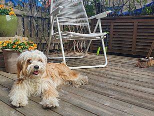 Terrasse og hund