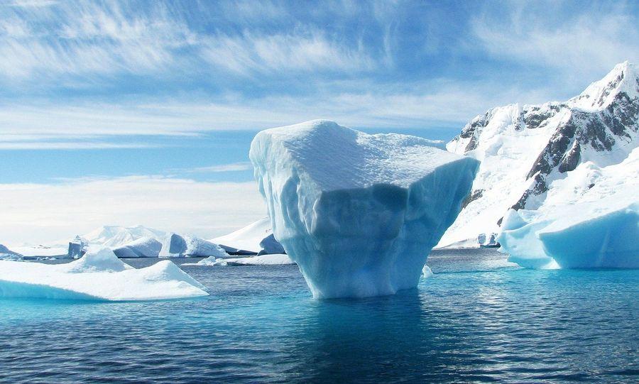 У віддаленому районі Антарктиди виявили скелет загадкової істоти