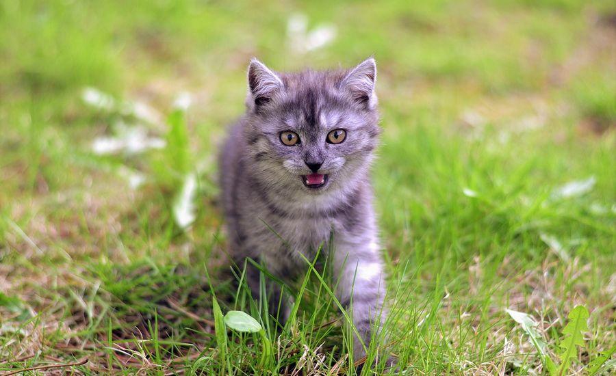 «В лучших традициях агента 007»: ловкий кот поразил эффектным побегом от собаки (ВИДЕО)