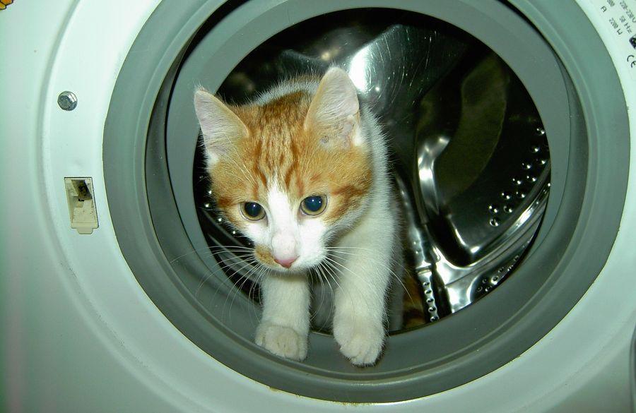 Сообразительный кот превратил стиральную машину в веселый аттракцион (ВИДЕО)