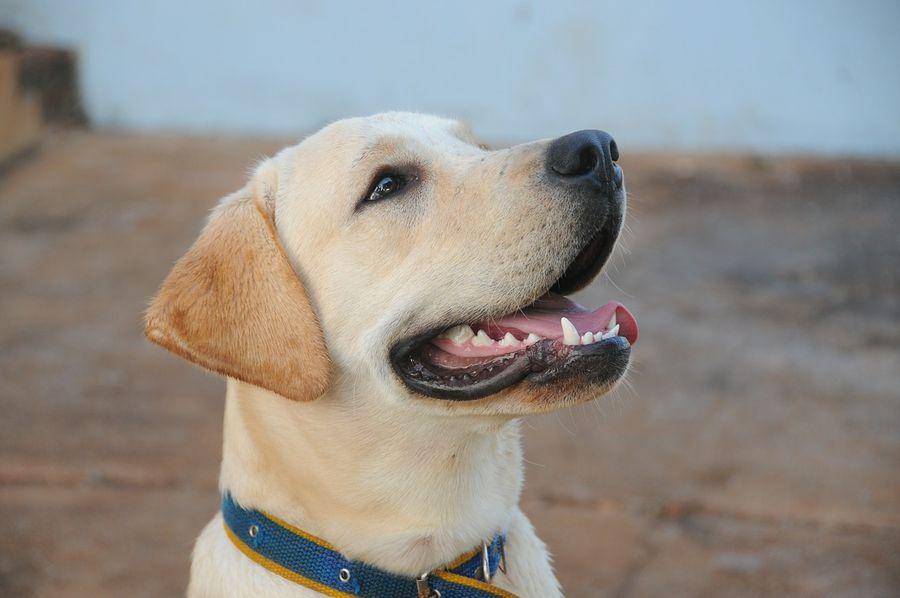 Пример настоящей дружбы: Пес притворился хромым, чтобы поддержать хозяина с переломом (ВИДЕО)