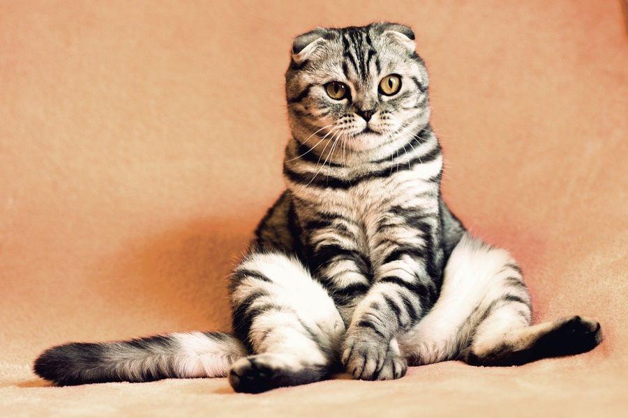 Справжній віртуоз: Кіт здивував імпровізацією на піаніно (ВІДЕО)