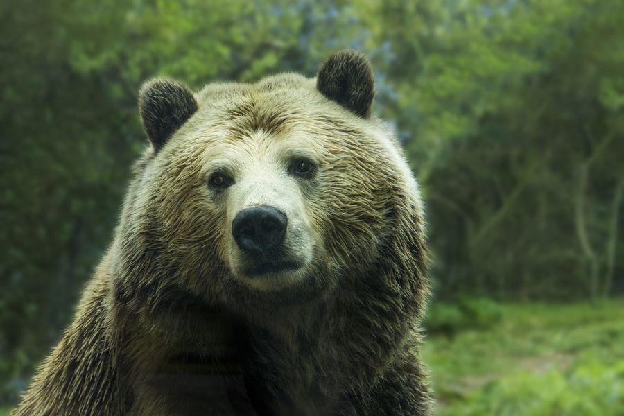 Неожиданный гость: Медведь вышел из леса и поел за одним столом с людьми (ВИДЕО)