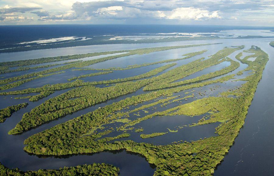 Ліси Амазонії стали виділяти більше вуглекислого газу, ніж поглинати: що говорять вчені