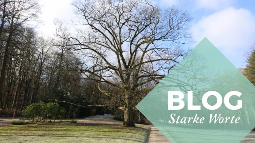 Starke Worte: Baum im Winter