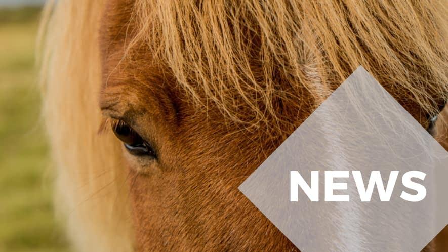 Nahaufnahme eines Pferdegesichts