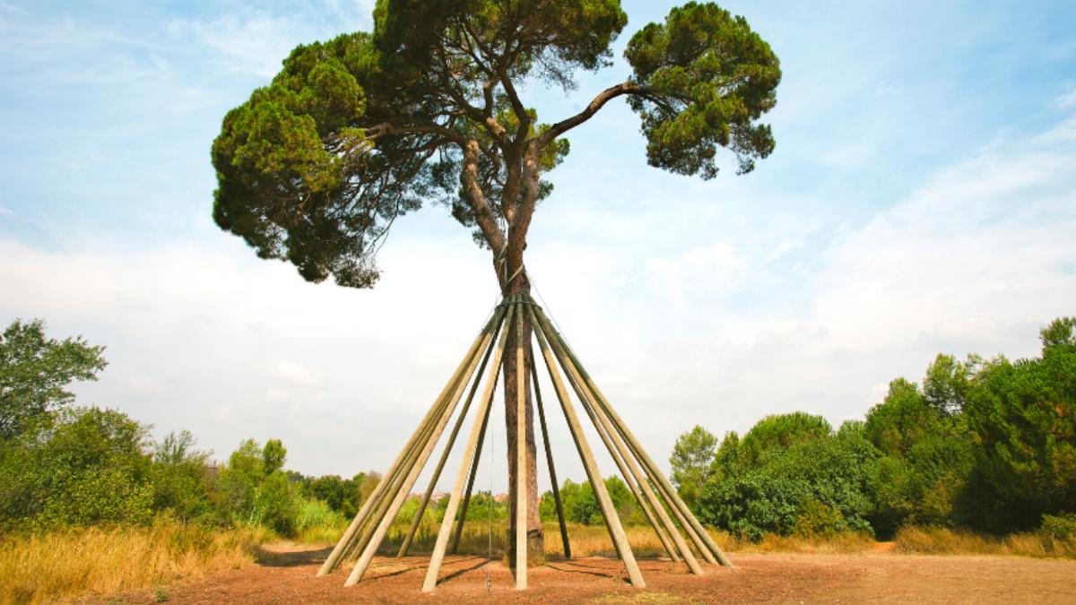 Symbolbild Baum mit Orthese
