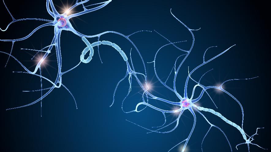 Nervenzellen