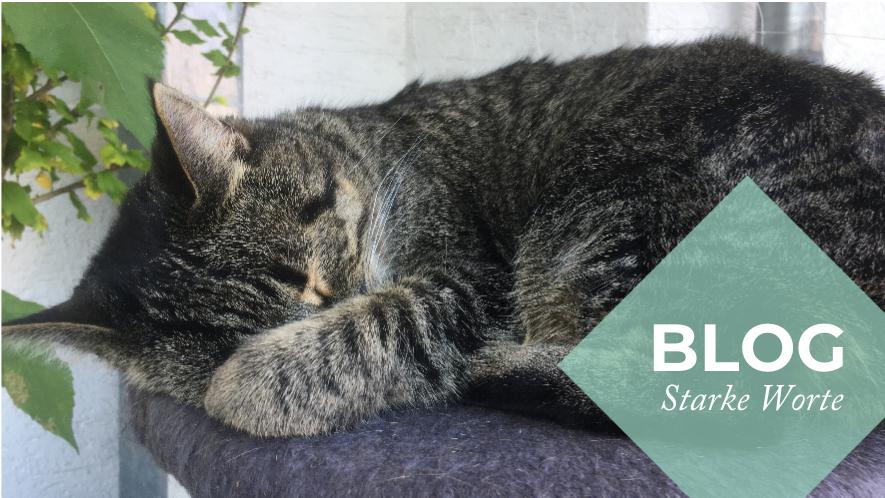 Katze Bella von MS-Angehöriger Mathilde schläft