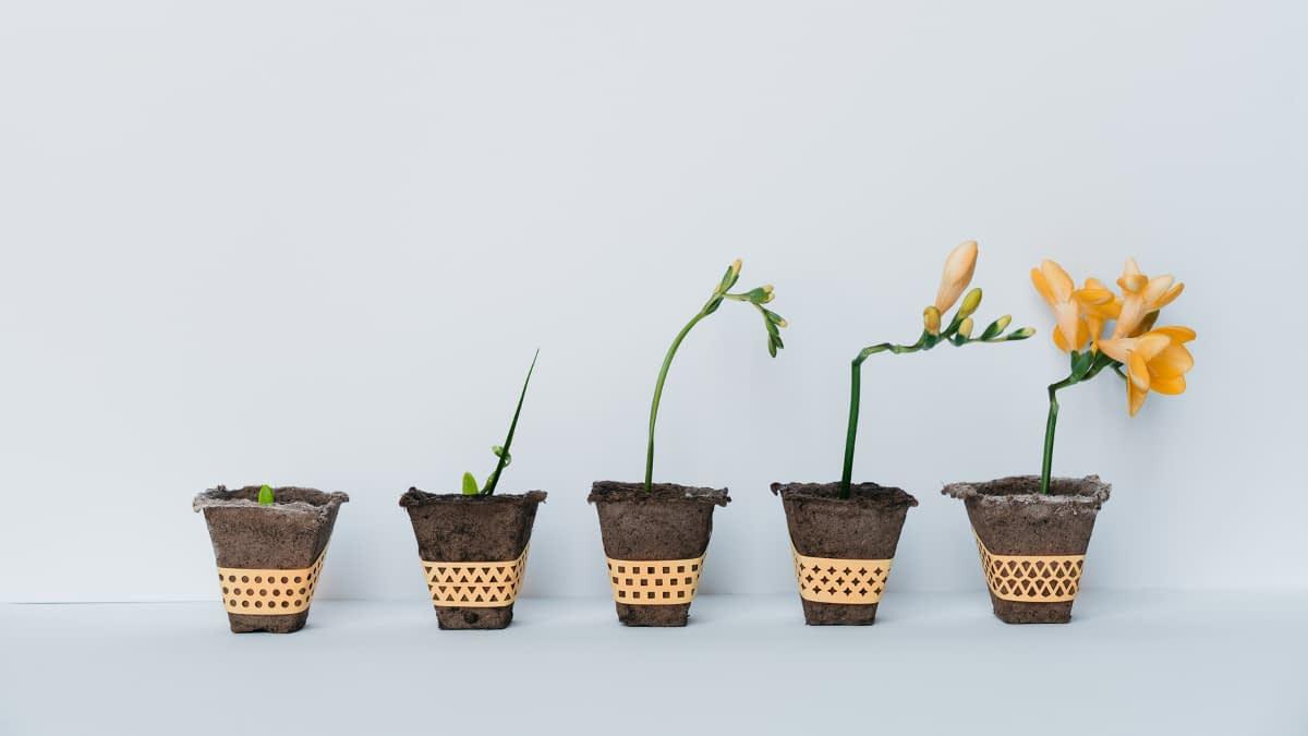 Wachstumsfortschritt Blumen