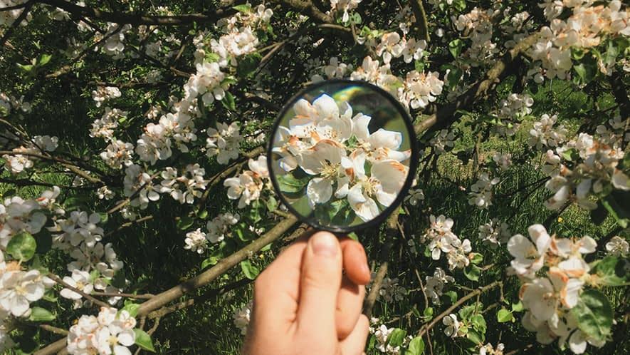 Blüten mit einer Lupe betrachtet