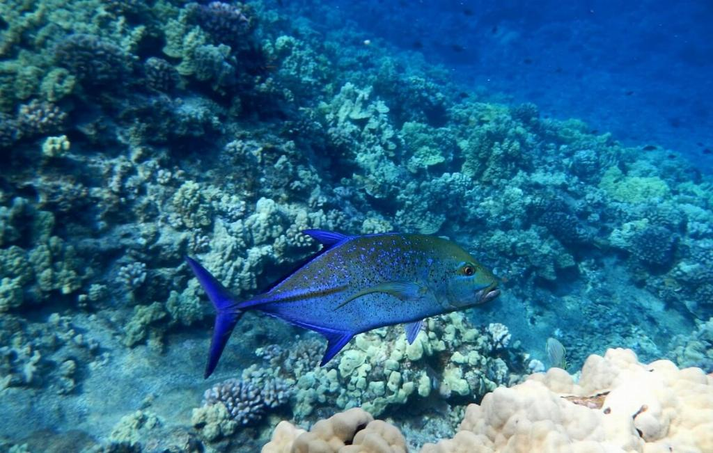 Molokini Crater reef fish