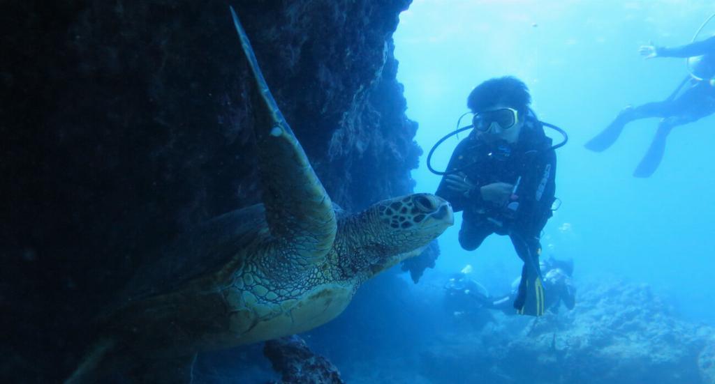 scuba divers in oahu