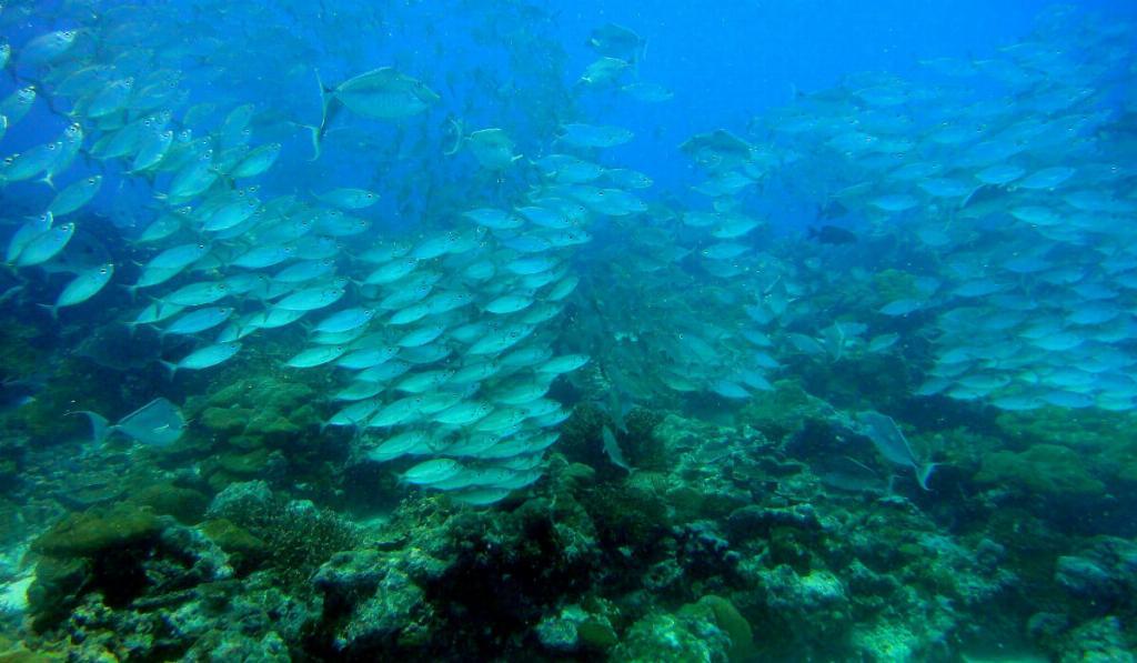fish shoaling