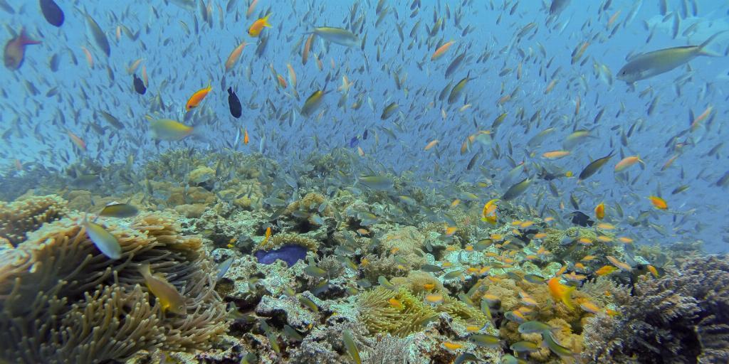 marine life zanzibar
