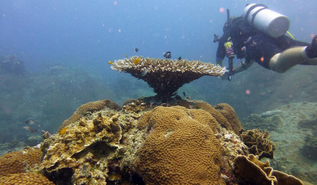 coral reef koh tao