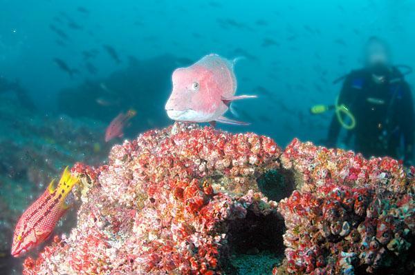 darwin island diving