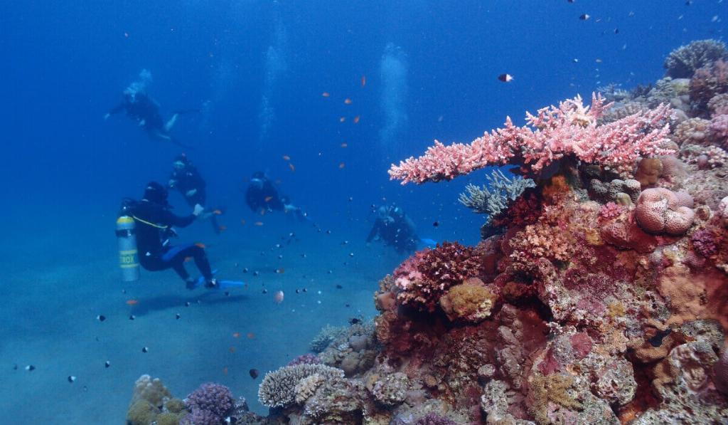 scuba diving egypt