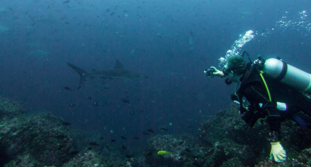 shark diving galapagos