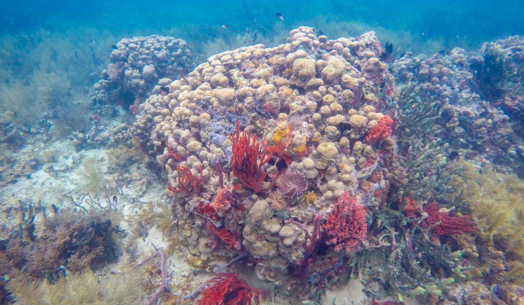 boca del toro reef