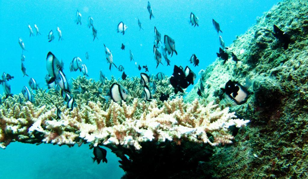 nha trand diving