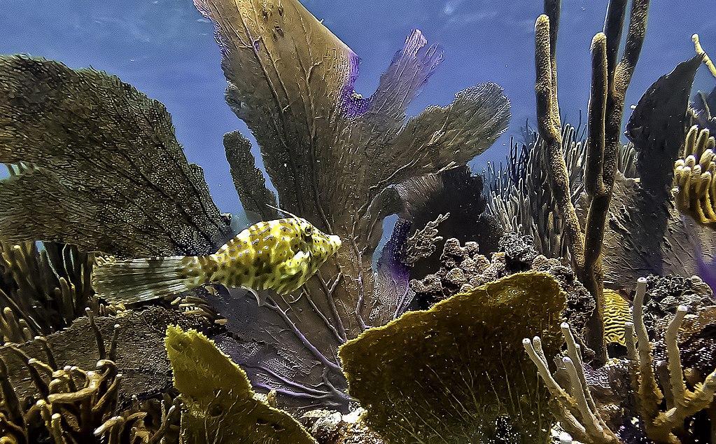culebra island corals